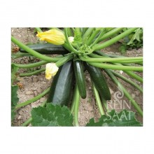 ZUCCHINI Black Beauty - Demeter